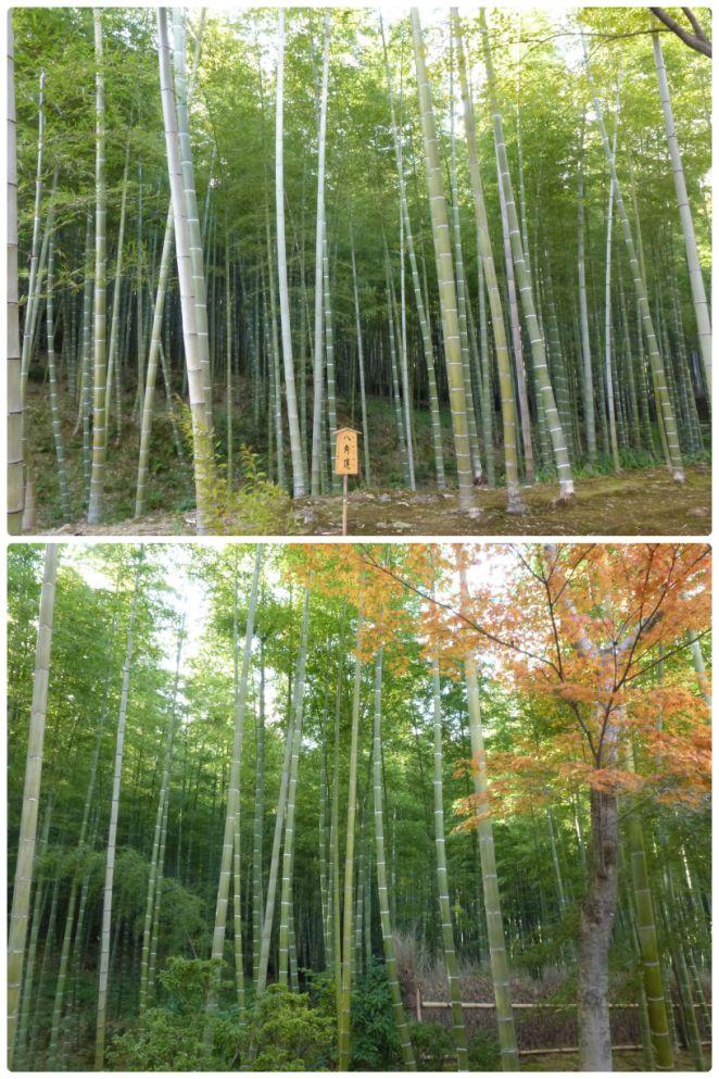 Arashiyama Bamboo 1
